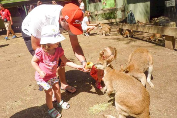 If you want a fun day out with the family visit Taronga Zoo and Featherdale Wildlife Park, two of the best things to do in Sydney with kids. We share tips, information and what you can expect from both.