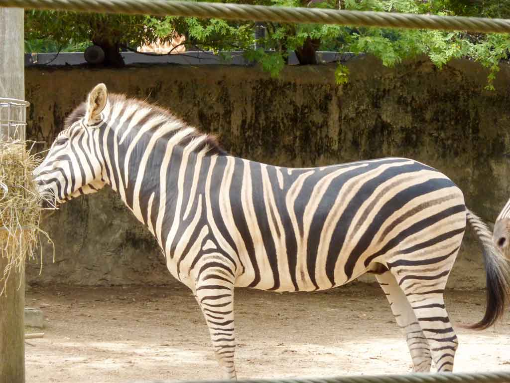 Tips, Advice and What to Expect from Taronga Zoo and Featherdale Wildlife Park