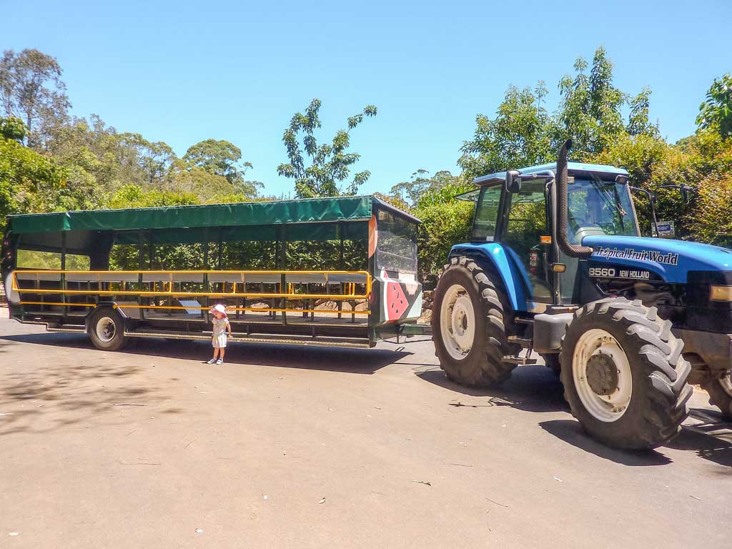Tropical Fruit World is one of the most family-friendly places to visit in northern New South Wales. An easy day trip from the Gold Coast full of fun and tropical treats.