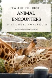 Two of the best wildlife encounters in Sydney - Taronga Zoo and Featherdale Wildlife Park. Tips, advice and what to expect on your visit.