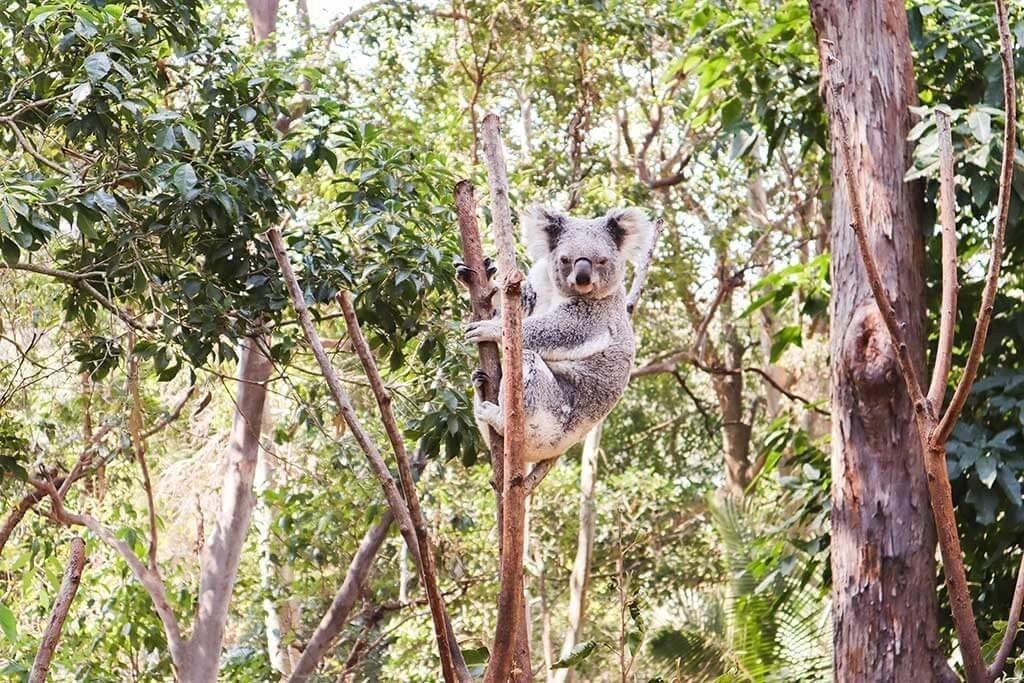 The ultimate kids activities guide detailing the very best things to do on the Gold Coast with kids.