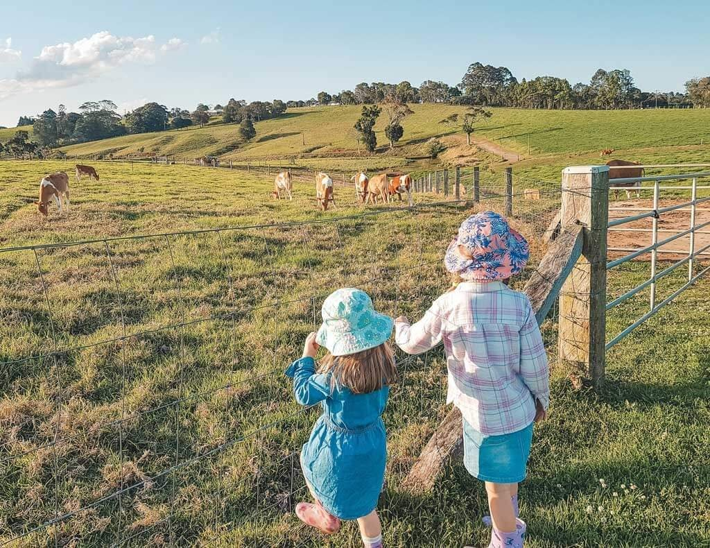 Maleny is located in the Sunshine Coast hinterland and known for its scenic treasures and sensational produce. Find out the best things to do in Maleny here.